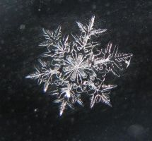 Snowflake by Shugs