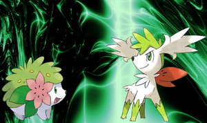 Both Shaymins by ThePokemonTrainer