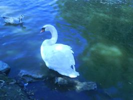 el Cisne by MarinaManaphy