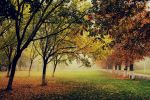 Autumn is here II by John77