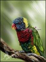 Rainbow Lorikeet by mejony