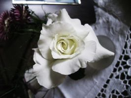 white rose stock by EvilHateYouAllStock