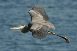 Gliding GBH 2 by Kippenwolf