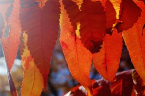 Fall Leaves 3 by nazzara