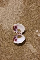 shell2 by emagenelson