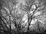 winter by TimTindall