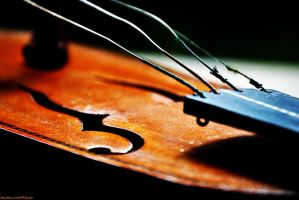 An old violin by murgymurge