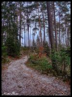 One photo from a walk. by Alouette-Photos