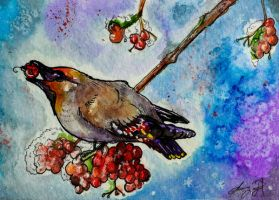 Waxwing Christmas by SunStateGalleries