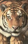 Tiger All In 1 by Piombo