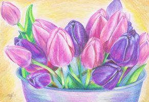 Tulips by Kaitana