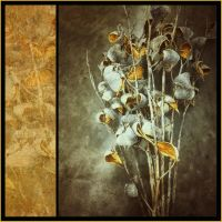 iPhoneography,   Milk Weeds by Gerald-Bostock