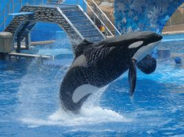 Shamu Jumping by loveonelost