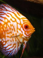 Discus by xHalloweenx
