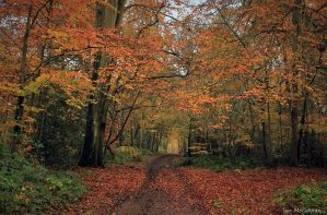 Path to Whippendell . by 999999999a