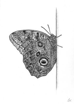 Owl Butterfly in BW by Caelitha