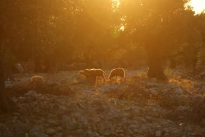 land of the lambs by Her-Redness