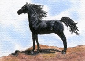 Black Arabian ACEO by calzephyr
