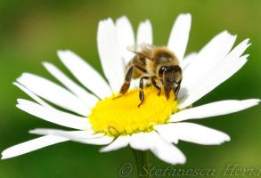 Little bee by fumuldetigara