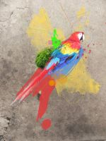 Colorful Parrot by Tamile