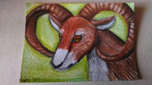 ACEO ~ Moufflon by yikoo
