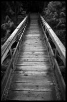 My Day In Black-White VI by bcdirector