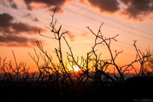 Simple but beautiful Sunset by fti7