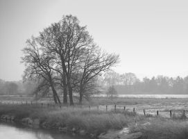 The Tree by KB-Fotografie