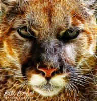 Cougar: Fractalius Re-Edit by nerdboy69