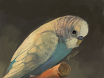 Budgie portrait [3DS] by Twarda8