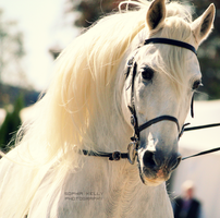 Studying The Crowd . . by horsegirlforlife123