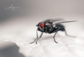 Red Eye by Stridsberg