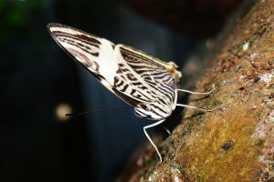 butterfly by Francr2009