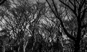 The Slenderman Waiting Grounds (Part 1) by Thishumanbeing