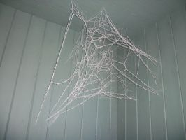Frozen Spider Web by Dunder-Muffin