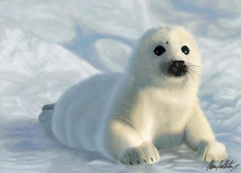 Willie the Seal Pup by Dragonite1