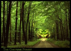 The Cheshire Forest by vincent3fx