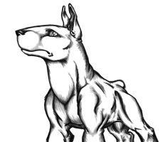 Bull Terrier Doodle by Da-Vos