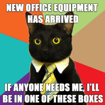 Business cat, new off. equipt. by MissnDtown