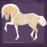 Winter Import 737 by Psynthesis