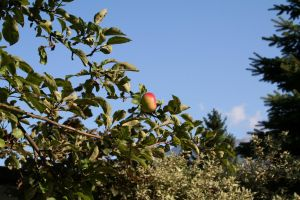 Lustrous Apple by Lukasio