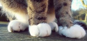 cat paw by thetheresa
