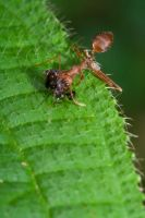 When ants attack by kyl191