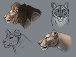 Finished Lion Portrait Practice Tutorial by CalebP1716