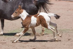HORSE STOCK - Foal 6 by kittykitty5150