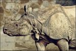I'm the Rhino by sundeep715