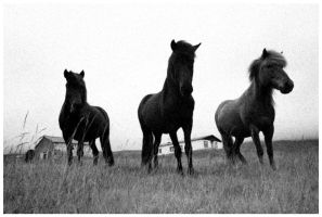 Horses by flemmens