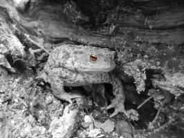 Toad by adel0136