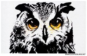 Owl Eyes by Click2Enlarge