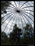 Aviary Silhouette by DarthIndy